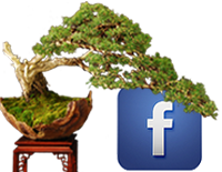 facebook-logo-bonsai-1