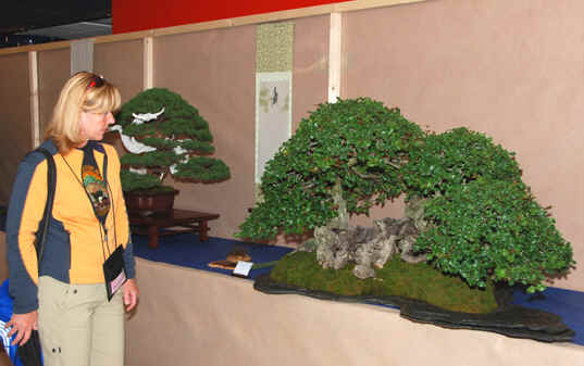 Kongres Bonsai club International Saint Vincent, Taliansko 2008