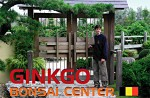 GINKGO BONSAI CENTER