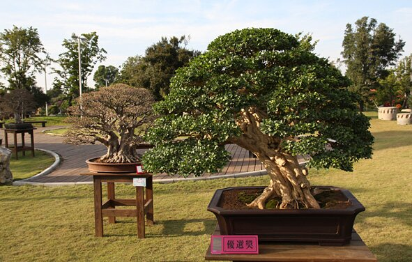 10th Asia Pacific Bonsai Convention, Taiwan 2009